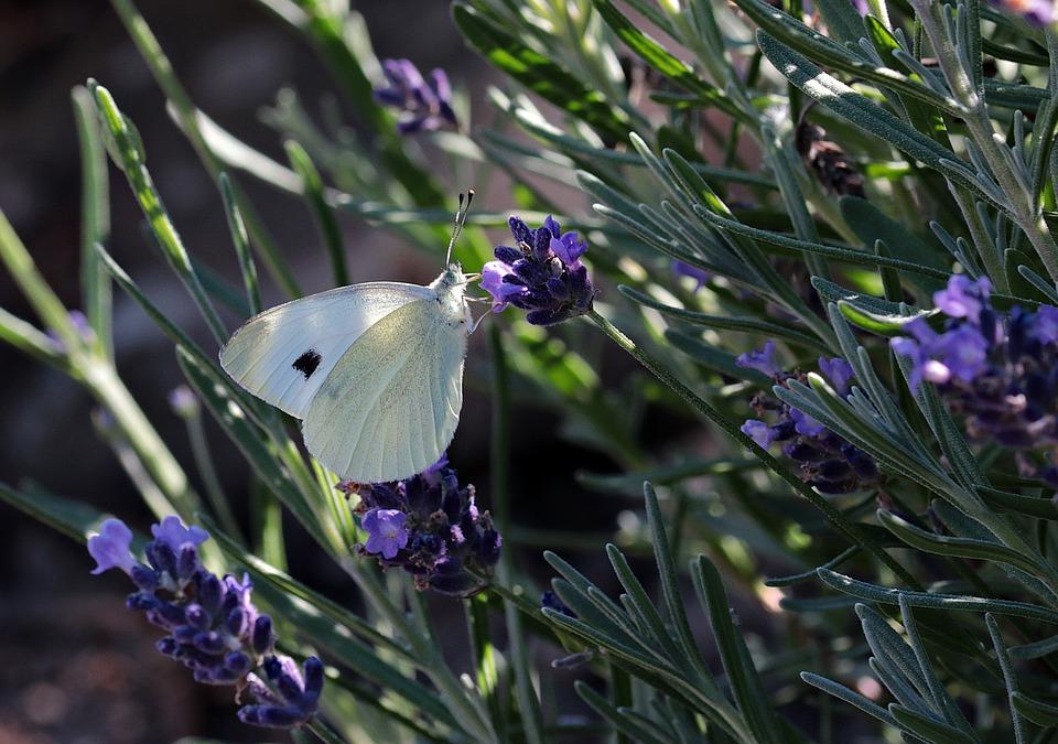 Jaarlijkse telling: de vlinder heeft het moeilijk