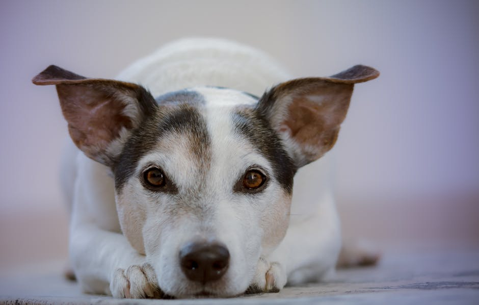 Hoe kom je van je angst voor honden af