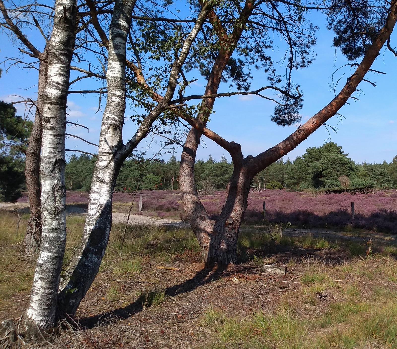 Eeuwigdurende grafrust op een natuurbegraafplaats